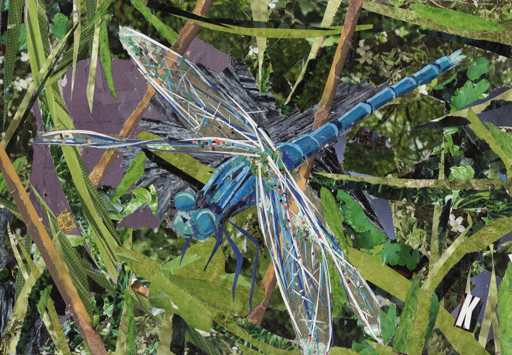 Blue Dragonfly Collage