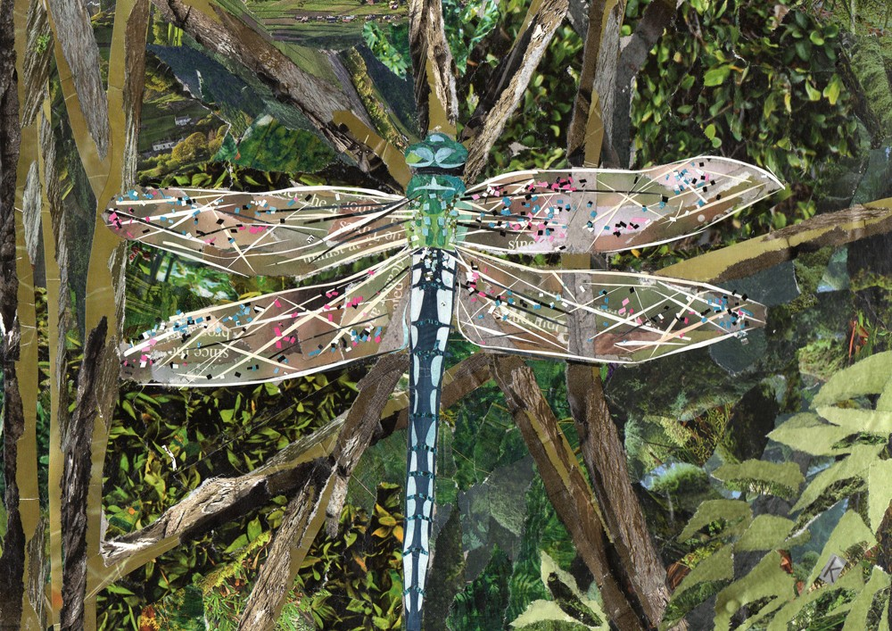 Turquoise Dragonfly collage